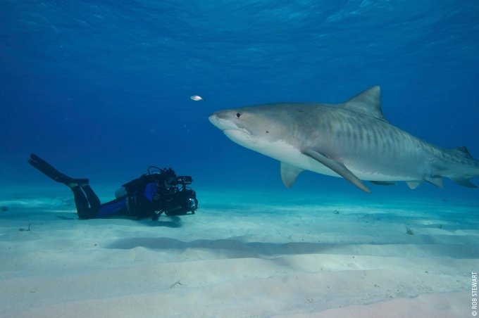 Revolution_rob-filming-sharks-at-little-bahama-bank_webcredit4
