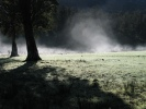 Mist at Lake Mattheson NZ