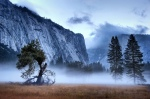 Misty Morning -Yosemite